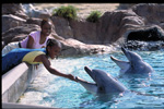 Petting Dolphins at SeaWorld